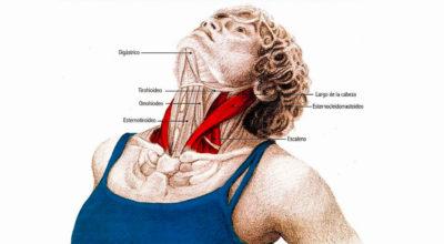 Супер упражнения для шеи: Освобождают от зажимов и нормализуют давление