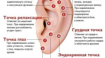 Активные точки уха