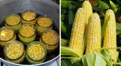 Заготавливаем кукурузу в банках на зиму правильно